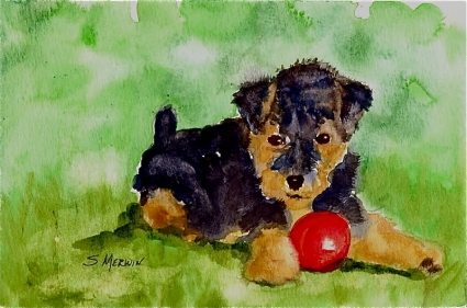 phoenix__out_of_the_ashes___welsh_terrier_airedale_pup